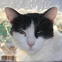 Adopt A Pet :: Melody - Morgan Hill, CA