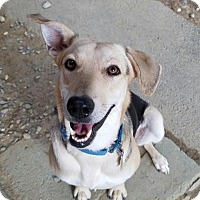 Adopt A Pet :: Paulette - Freeport, ME