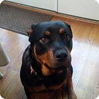 Adopt A Pet :: Roxie - Frederick, PA