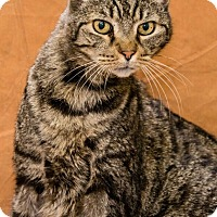 Adopt A Pet :: Jiminy - Chesapeake, VA