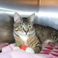 Adopt A Pet :: Venus - Westville, IN