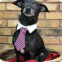Adopt A Pet :: Baxter - Benbrook, TX