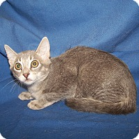 Adopt A Pet :: K-Jenny2-Janice - Colorado Springs, CO