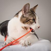 Adopt A Pet :: Theo - Lambertville, NJ