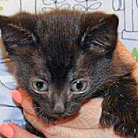 Adopt A Pet :: Didget - Wildomar, CA