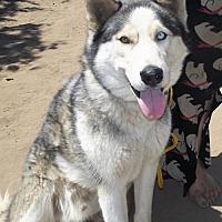 Adopt A Pet :: Ratchet - Pacific Grove, CA