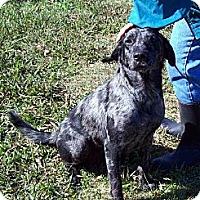 Adopt A Pet :: ALEXIS - Glastonbury, CT