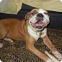 Adopt A Pet :: Calliope  ADOPTED!! - Antioch, IL