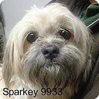 Adopt A Pet :: Sparkey - Greencastle, NC