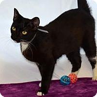 Adopt A Pet :: Lizzie - Colorado Springs, CO