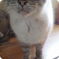 Adopt A Pet :: Diamond - Fairborn, OH