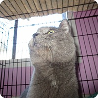 Adopt A Pet :: Lucy in the sky - Coos Bay, OR