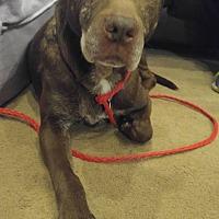Adopt A Pet :: Diamond - Rising Sun, MD