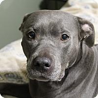 Adopt A Pet :: Sky - Shrewsbury, NJ