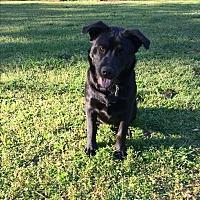 Adopt A Pet :: Loki - Macon, GA