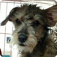 Adopt A Pet :: Kato - San Diego, CA