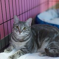Adopt A Pet :: Lorax - Houston, TX