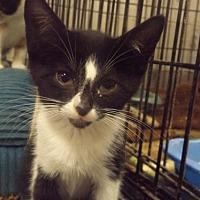 Adopt A Pet :: Odie - Zaleski, OH