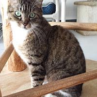 Adopt A Pet :: Jimmy - Diamond Springs, CA