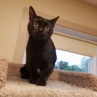 Adopt A Pet :: Cicero - Waupun, WI