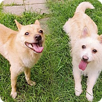Adopt A Pet :: Holly & Ivy(Bonded pair) - Fairfax, VA