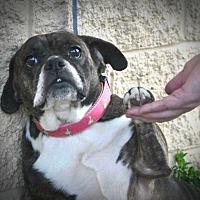 Adopt A Pet :: Tuleah - Newark, DE