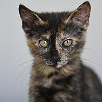 Adopt A Pet :: Rembrandt - Burbank, CA