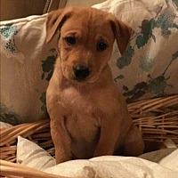 Adopt A Pet :: LATTE - Cranston, RI