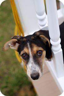 Hound (Unknown Type)/Terrier (Unknown Type, Medium) Mix Puppy for adoption in Monroe, New Jersey - Kiki