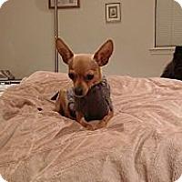 Adopt A Pet :: Maggie - Poulsob, WA