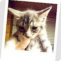 Adopt A Pet :: Buttons - Owosso, MI