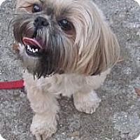 Adopt A Pet :: Mia - Port Orange, FL