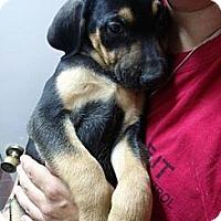 Adopt A Pet :: Cubone - South Jersey, NJ