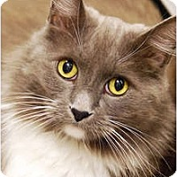 Adopt A Pet :: Toby - Encinitas, CA