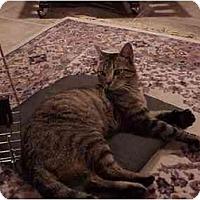 Adopt A Pet :: Sam - Jenkintown, PA