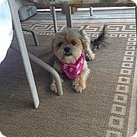 Adopt A Pet :: Layla - Hazard, KY