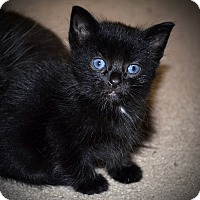 Adopt A Pet :: Todd - Xenia, OH
