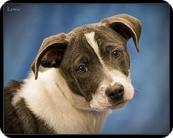 Terrier (Unknown Type, Medium) Mix Dog for adoption in Wickenburg, Arizona - Lewis