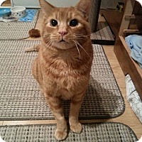 Adopt A Pet :: Marty - Douglas, ON