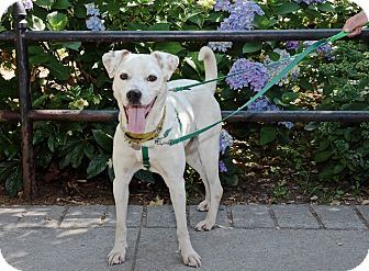 Hound (Unknown Type) Mix Dog for adoption in Jersey City, New Jersey - Bebe Neuwirth