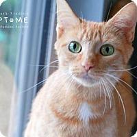 Adopt A Pet :: Clementine - Edwardsville, IL