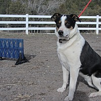 Adopt A Pet :: Deuce - Ridgway, CO