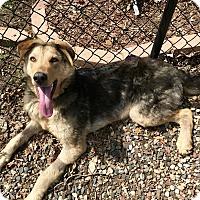 Adopt A Pet :: Gabe - Bloomington, MN