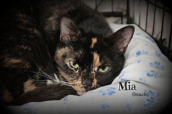 Domestic Shorthair Cat for adoption in Glen Mills, Pennsylvania - Mia