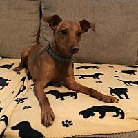 Adopt A Pet :: Manny - Mentor, OH