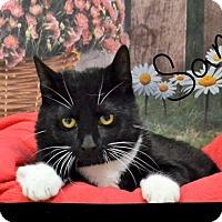 Adopt A Pet :: Sam - Lebanon, MO