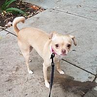 Adopt A Pet :: Bunny - Encino, CA