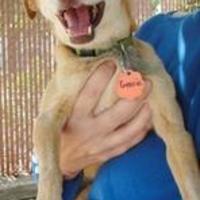 Adopt A Pet :: Gracie - Fresno, CA
