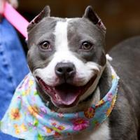 Adopt A Pet :: Mary Lou - Kettering, OH