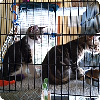 Adopt A Pet :: Gandor - Huguenot, NY